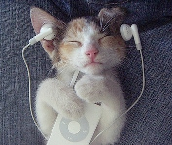 animal-cruelty-cat-cute-ipod-music-Favim.com-119048